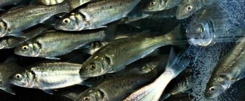 Büsumer Fischtage